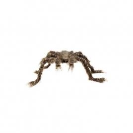 Araña peluda color marrón